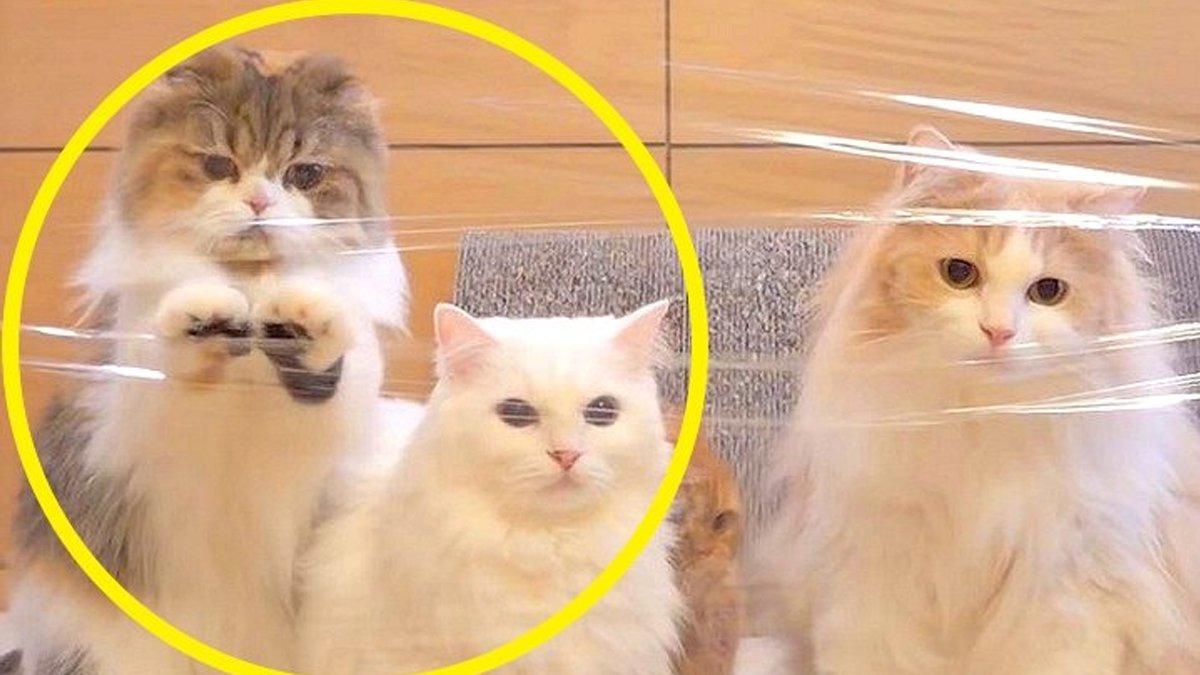 '이게 뭐냐옹' 투명벽 만난 고양이들이 보인 특별한 반응